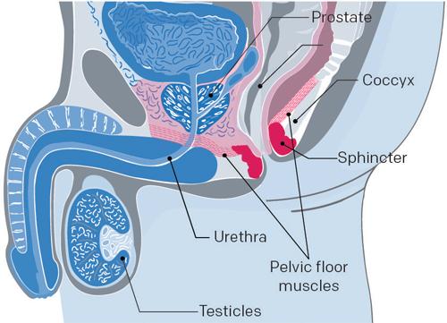 kegel contre incontinence pour cancer prostate