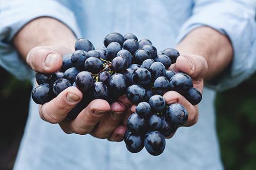 cancer prostate et bienfaits des raisins